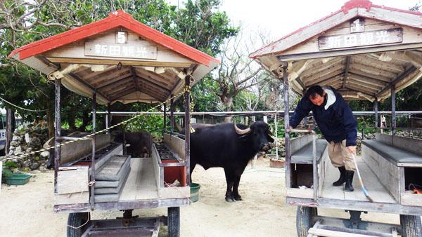水牛もいる竹冨島