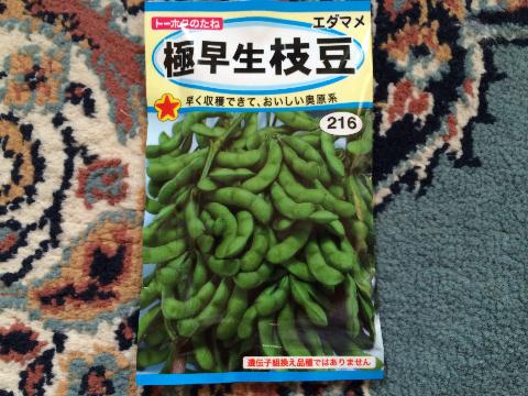 20160522 育苗(枝豆)①