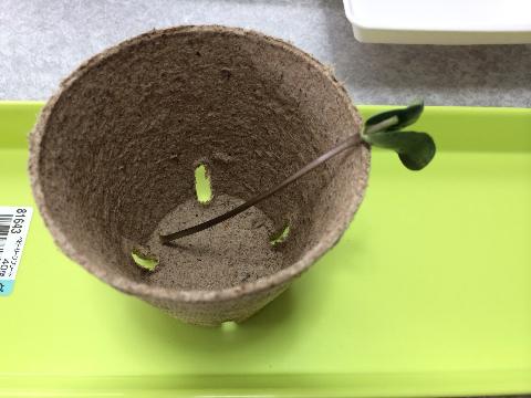 20160529 枝豆⑩