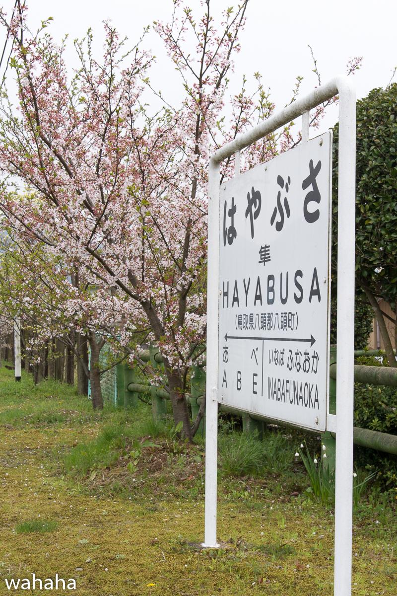 280410wakasa_hayabusa-13.jpg