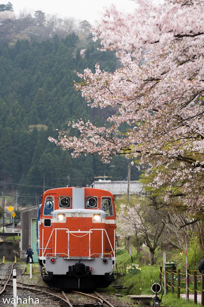 280410wakasa_maturi-21b.jpg