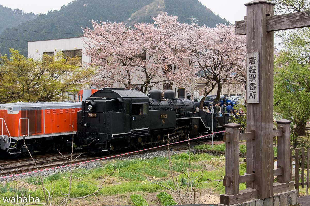 280410wakasa_maturi-23b.jpg