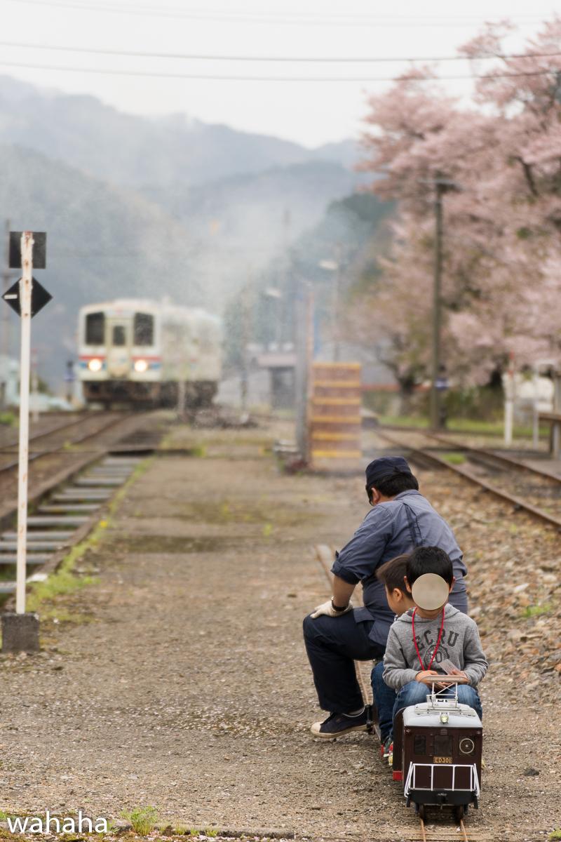 280410wakasa_maturi-29b.jpg