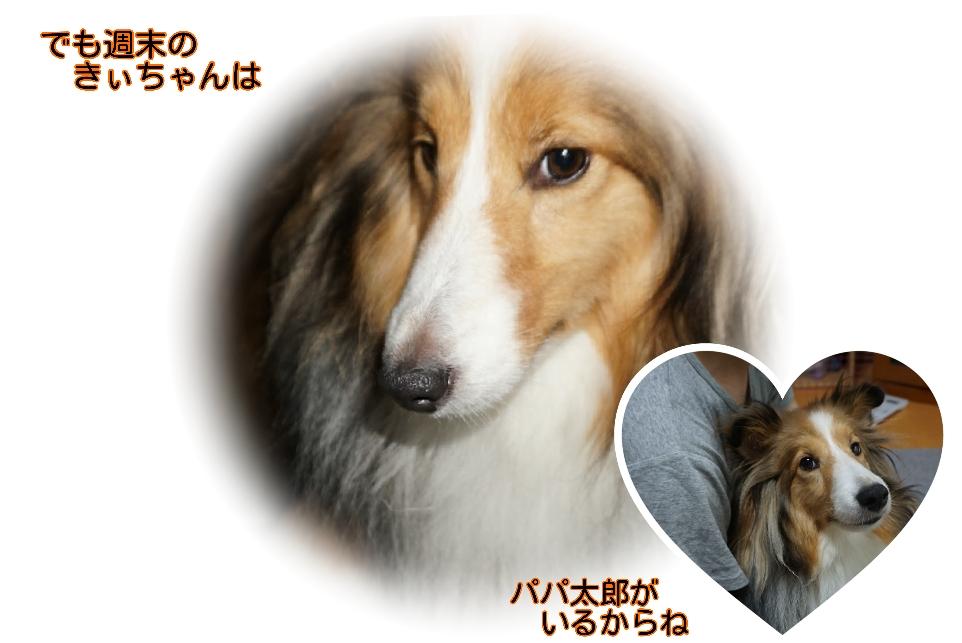 16-07-09-09-53-47-406_deco.jpg