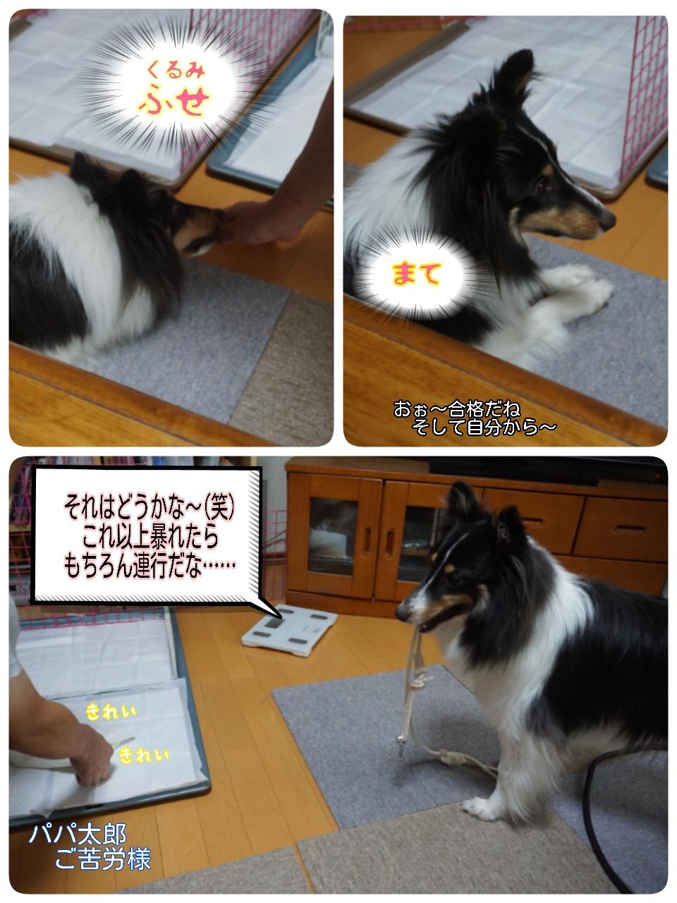 16-07-09-15-31-37-281_deco.jpg