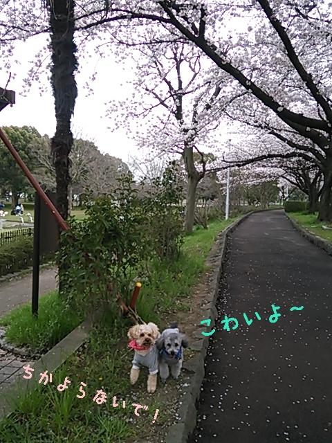 16-04-05-12-55-27-129_deco.jpg