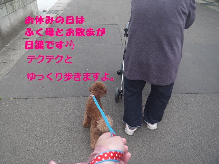 ふく母とお散歩
