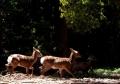 ③奈良公園の鹿