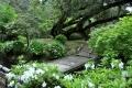 ④臥龍イチイの木