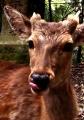 ⑦かわいい鹿