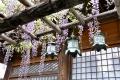 ⑨春日大社の吊灯篭とふじ棚