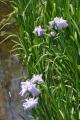 ⑦春の海(日本庭園)