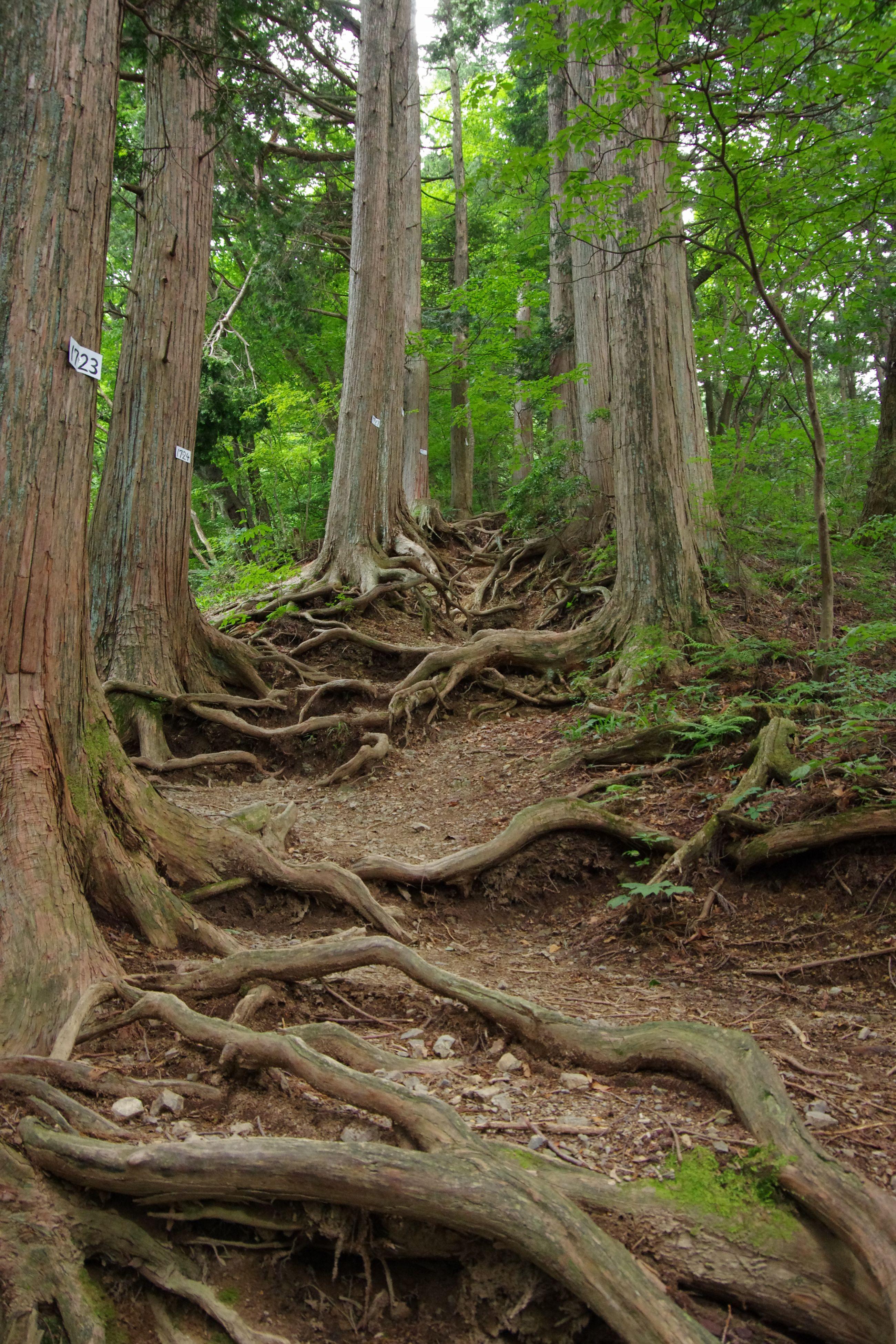 奥の院登山道