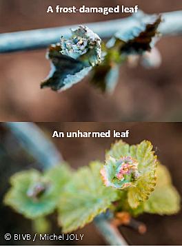 frost01.jpg