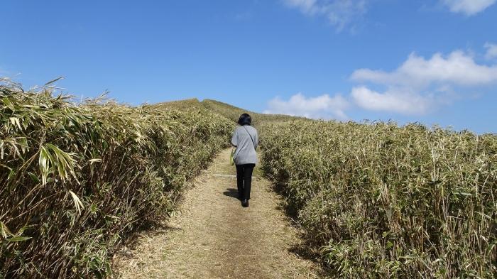 達磨山 (3)