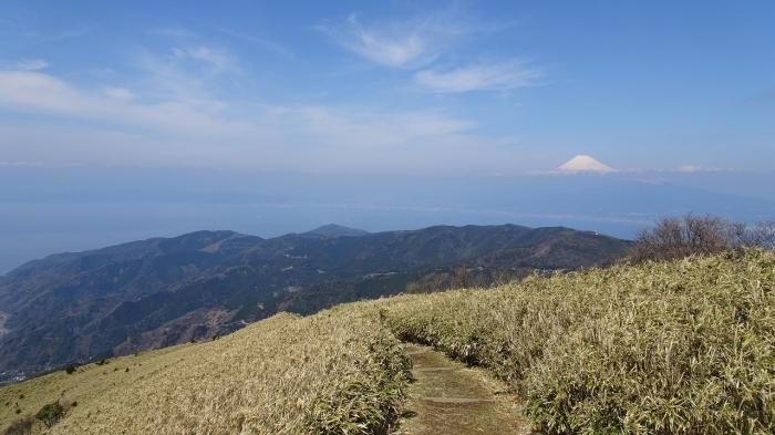 達磨山 (7)