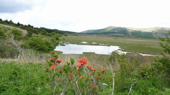 白樺湖と八島湿原 (11)