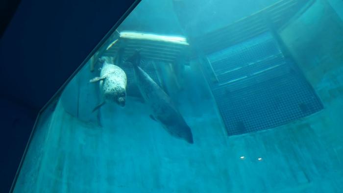 名古屋港水族館 (5)