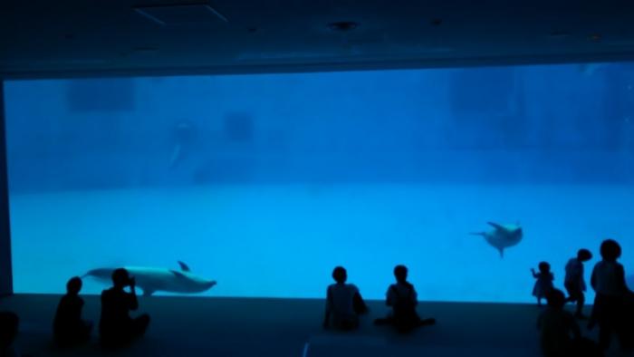 名古屋港水族館 (4)
