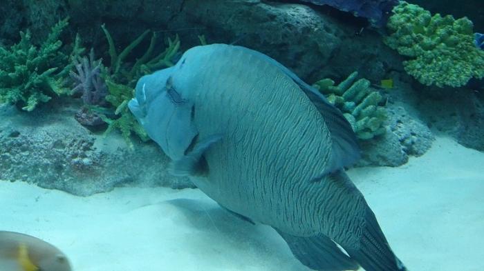 名古屋港水族館 (3)