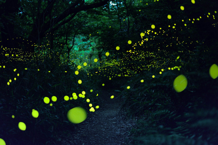 2016-summer-firefly-selects-spoon-and-tamago-2.jpg