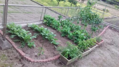 菜園6・10