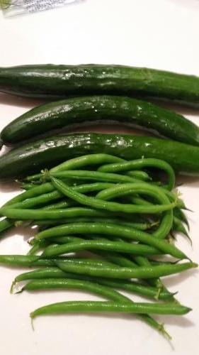 菜園収穫28・6・19
