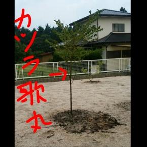 PhotoGrid_1467888506232.jpg