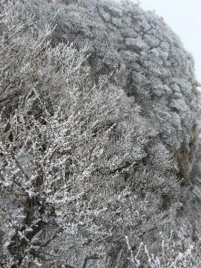 1由布岳樹氷