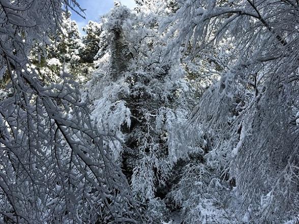太宰府樹氷