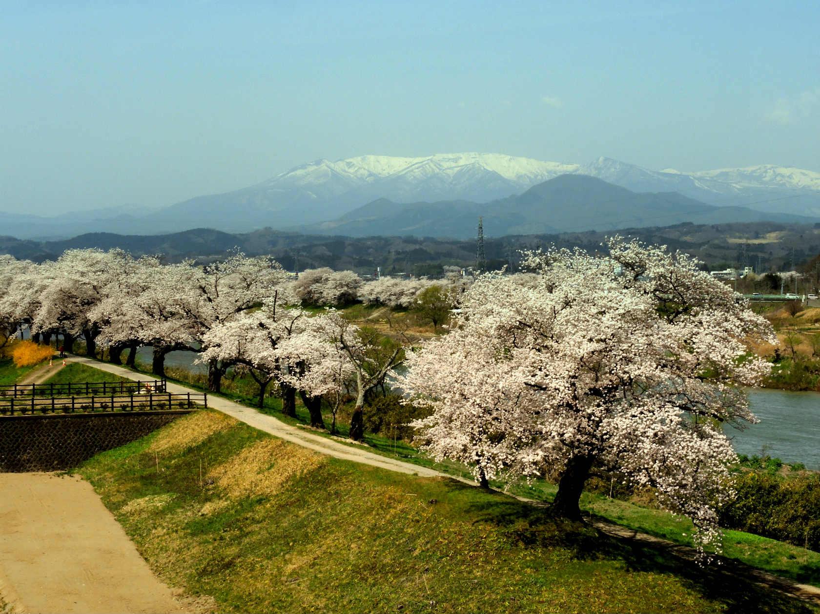しばた千桜橋からの蔵王連峰2