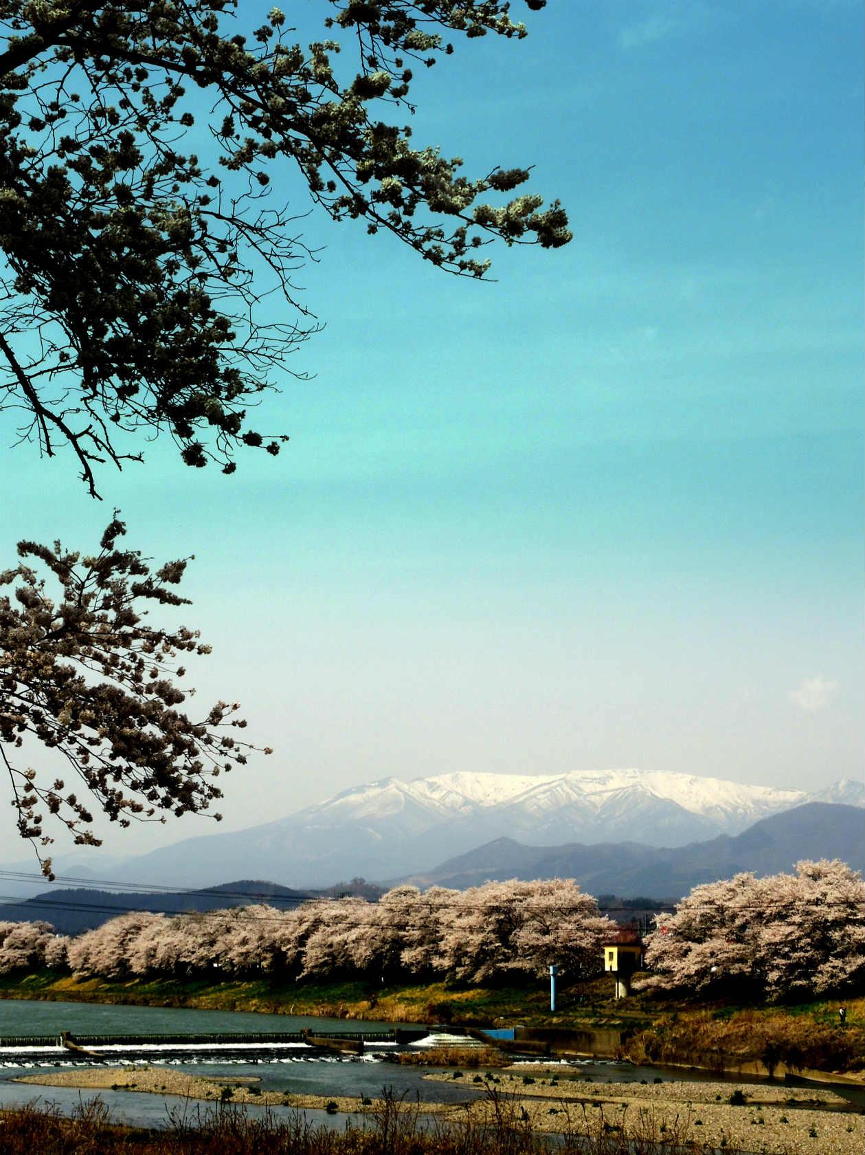 一目千本桜と蔵王連峰2