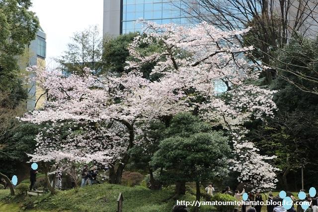 小石川後楽園 (5)