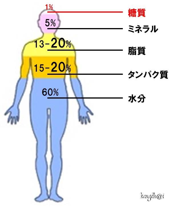 身体の成分
