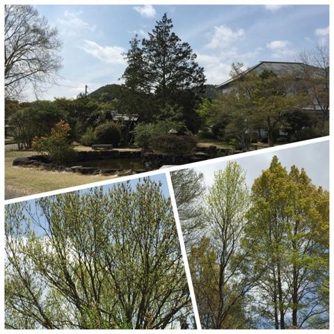 新緑の季節2
