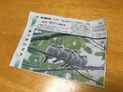 朝日新聞 シマエナガ