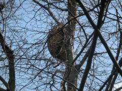 ハチの巣?