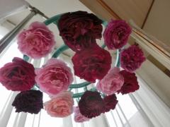 Uちゃん宅のバラ