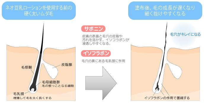 ネオ豆乳ローション 効果