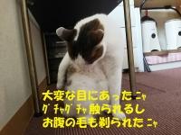 01_2016040811375316f.jpg