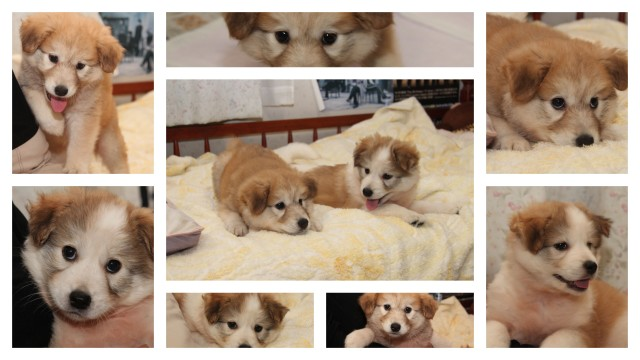 160414子犬-004