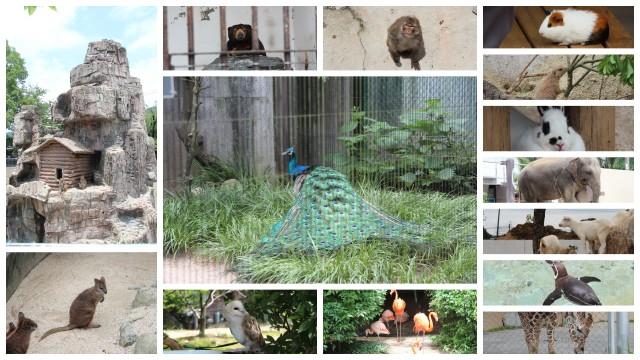 160702動物園2