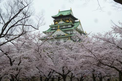 大阪城 西ノ丸庭園から大阪城  2016 4月5日 (mt.okuho)