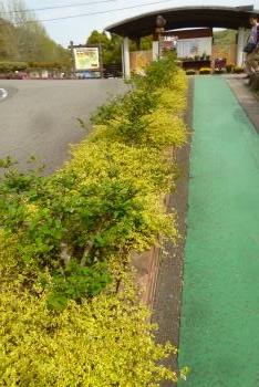緑花センター スイーツフェスタ  2016 (mt.okuho)