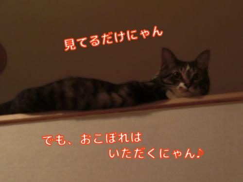 CIMG8793.jpg