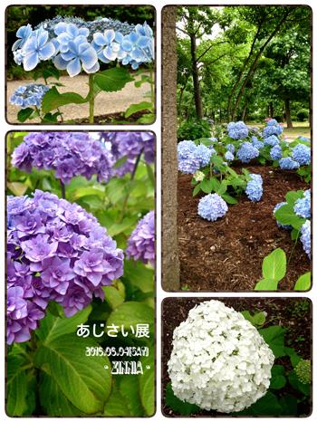 USJ & 季節の花「紫陽花」を見に5