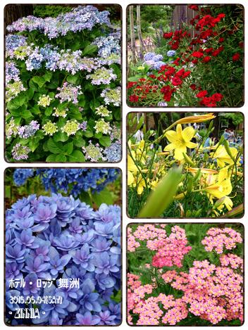 USJ & 季節の花「紫陽花」を見に6