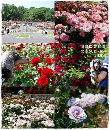 季節の花「バラ」を見に4