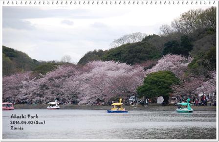 *お花見* 2016①