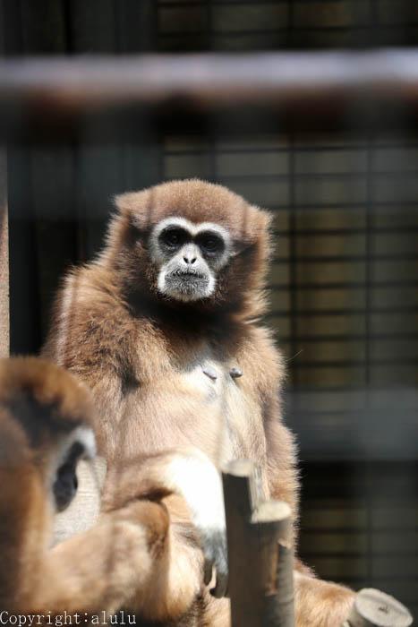 羽村市動物園 おさるさん サル